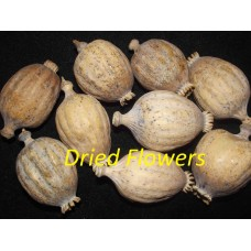 Dried decorative bulbs / heads -  2.5kg / 5.5lbs